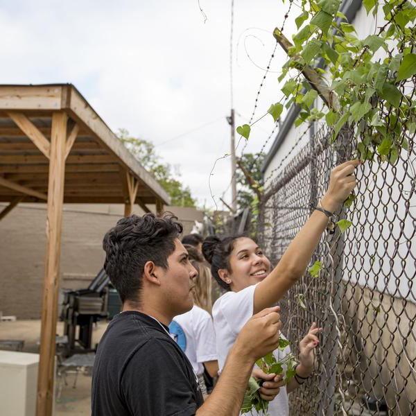 Two students threading ivy through a chain link fence